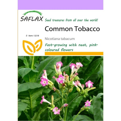 Saflax  - Common Tobacco - Nicotiana Tabacum - 250 Seeds