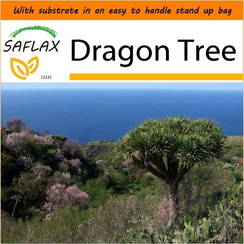 SAFLAX Garden in the Bag - Dragon Tree - Dracaena - 5 seeds