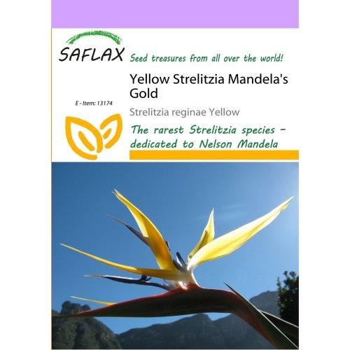 Saflax  - Yellow Strelitzia Mandela's Gold - Strelitzia Reginae Yellow - 4 Seeds