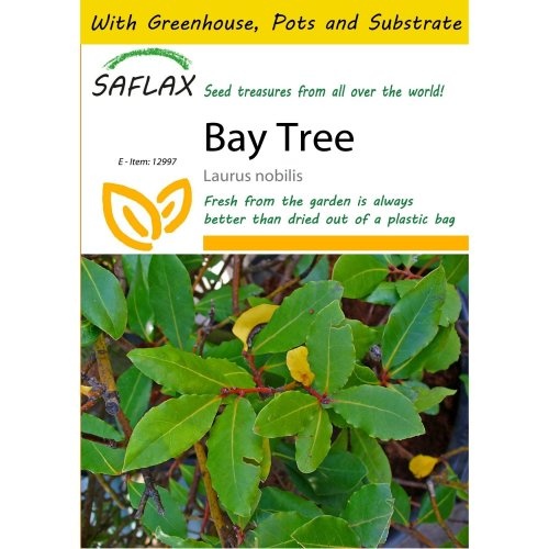 Saflax Potting Set - Bay Tree - Laurus Nobilis - 6 Seeds - with Mini Greenhouse, Potting Substrate and 2 Pots