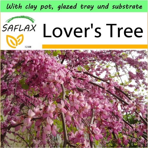 SAFLAX Garden to Go - Lover's Tree - Cercis - 60 seeds