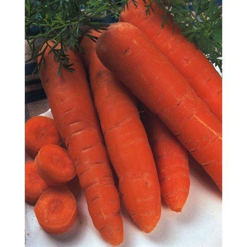 Organic Vegetable - Carrot - Flakkee - 3000 Seeds