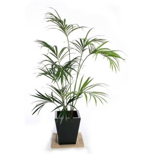 Artificial Silk Kentia Palm Tree IFR