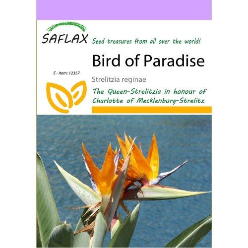 Saflax  - Bird of Paradise - Strelitzia Reginae - 5 Seeds