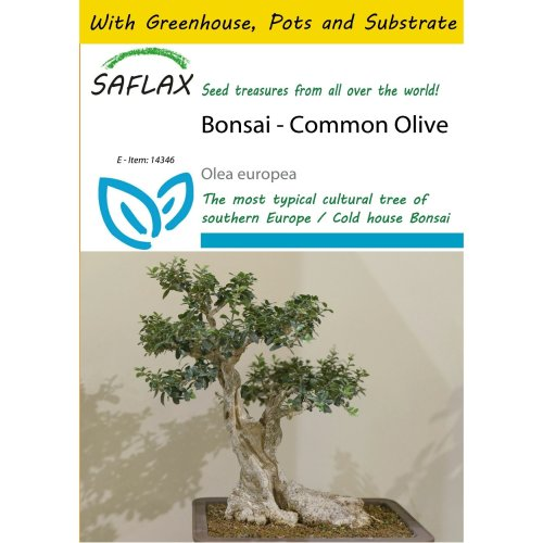 Saflax Potting Set - Bonsai - Common Olive - Olea Europea - 20 Seeds - with Mini Greenhouse, Potting Substrate and 2 Pots