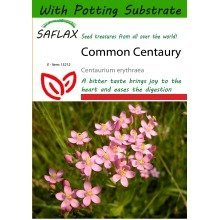 Saflax  - Common Centaury - Centaurium Erythraea - 250 Seeds - with Potting Substrate for Better Cultivation