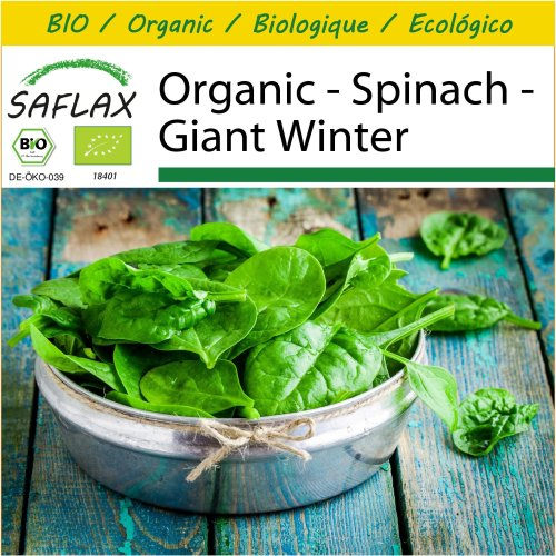 SAFLAX Potting Set - Organic - Spinach - Giant Winter - 250 certified organic seeds  - Spinacia