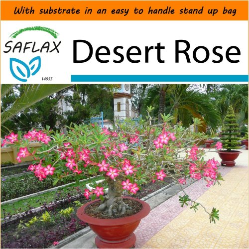 SAFLAX Garden in the Bag - Bonsai - Desert Rose - Adenium - 8 seeds