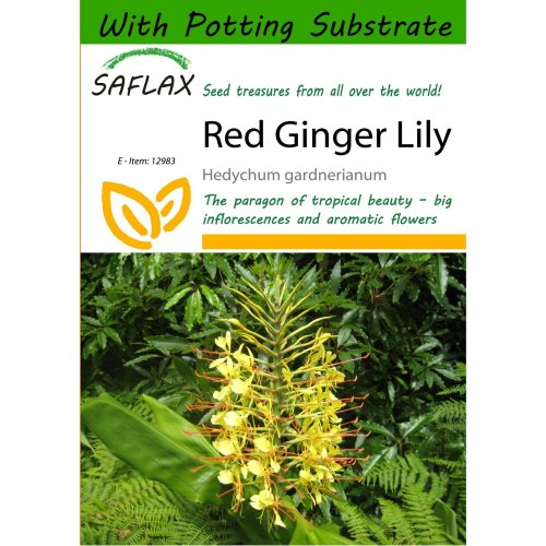 Saflax  - Red Ginger Lily - Hedychum Gardnerianum - 10 Seeds - with Potting Substrate for Better Cultivation