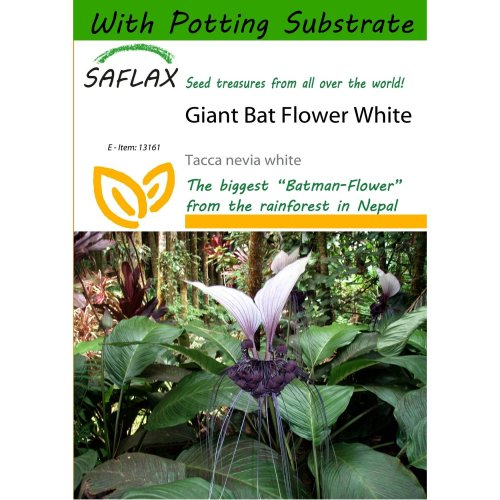 Saflax  - Giant Bat Flower White - Tacca Nevia White - 10 Seeds - with Potting Substrate for Better Cultivation