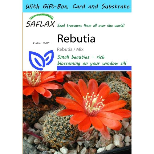 Saflax Gift Set - Rebutia - Rebutia / Mix - 40 Seeds - with Gift Box, Card, Label and Potting Substrate