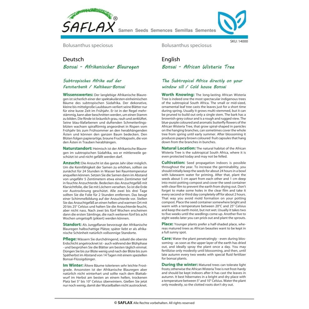 Bolusanthus speciosus SAFLAX African Wisteria Tree 15 seeds Bonsai