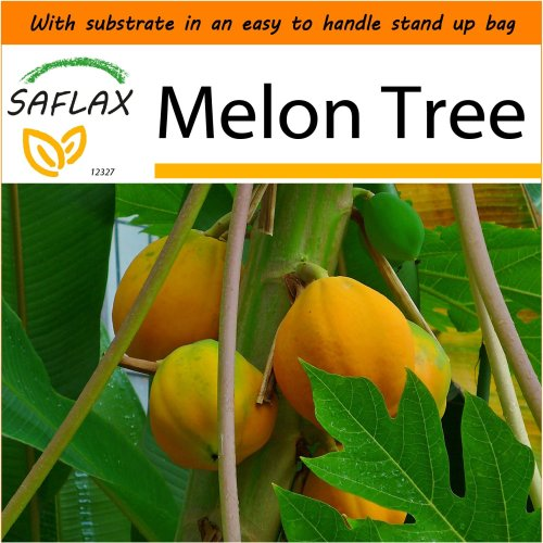 SAFLAX Garden in the Bag - Melon Tree - Carica - 30 seeds