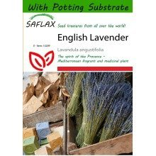 Saflax  - English Lavender - Lavandula Angustifolia - 150 Seeds - with Potting Substrate for Better Cultivation