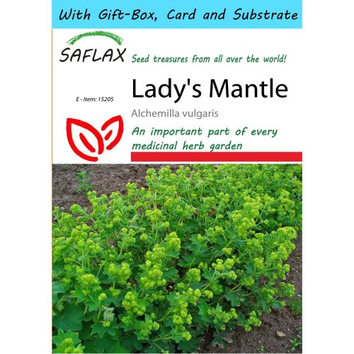 Saflax Gift Set - Lady's Mantle - Alchemilla Vulgaris - 100 Seeds - with Gift Box, Card, Label and Potting Substrate