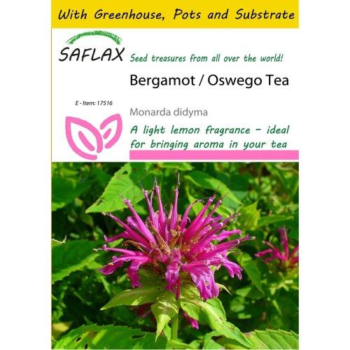 Saflax Potting Set - Bergamot / Oswego Tea - Monarda Didyma - 20 Seeds - with Mini Greenhouse, Potting Substrate and 2 Pots