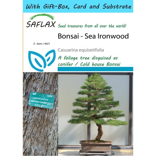 Saflax Gift Set - Bonsai - Sea Ironwood - Casuarina Equisetifolia - 200 Seeds - with Gift Box, Card, Label and Potting Substrate