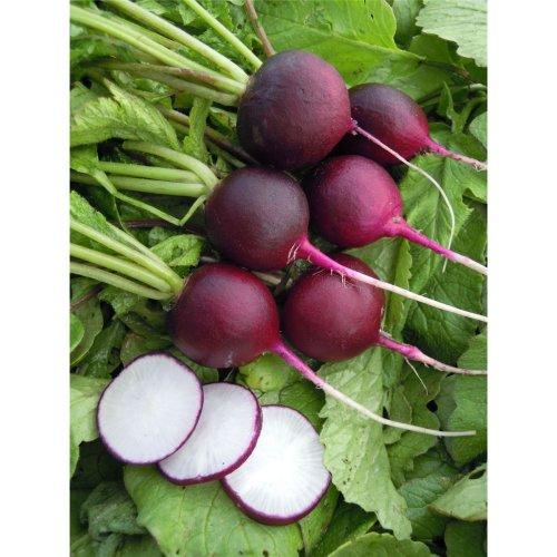 Vegetable - Radish - Malaga Violet - 120 Seeds