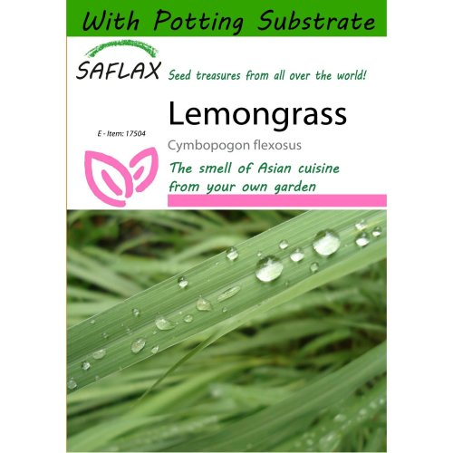 Saflax  - Lemongrass - Cymbopogon Flexosus - 50 Seeds - with Potting Substrate for Better Cultivation